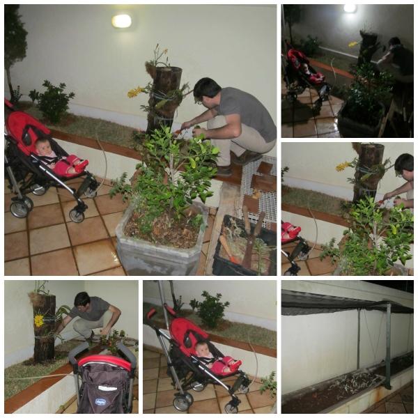 Plantando chuchu, peixinhos e colocando sombrite